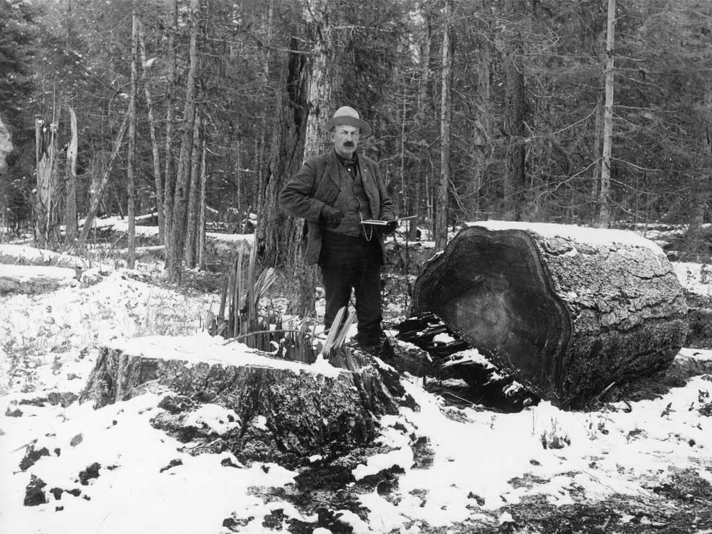 A Forest Service sale administrator stands beside a western larch stump and butt, during the Big Blackfoot Timber Sale in 1908. (Photo by W.J. Lubken)
