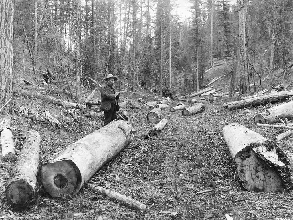 A Forest Service sale administrator counts timber for the U.S. Forest Service near Seeley Lake, Montana, c. 1908.